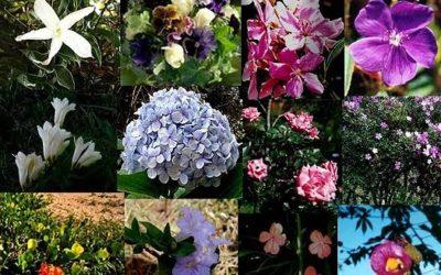 Composto Floral Gentileza, do Sistema Filhas de Gaia